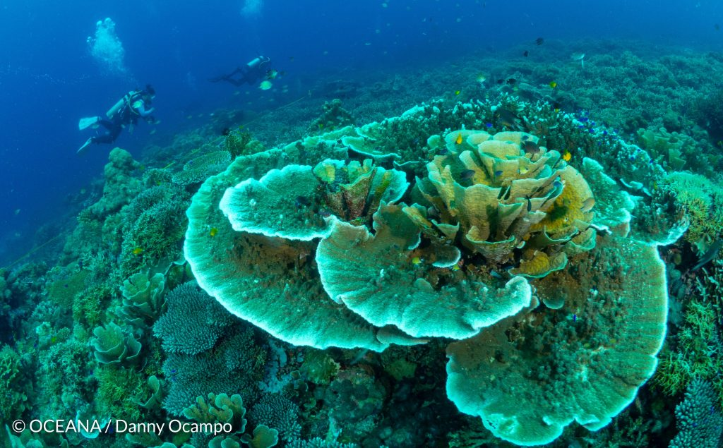 Oceana Launches Marine Expedition in Southern Leyte's Panaon Island