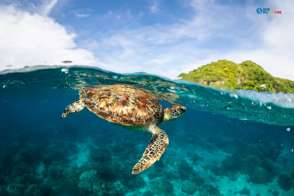 5 Philippine Dive Spots to Include on Your Water Adventure Bucket List